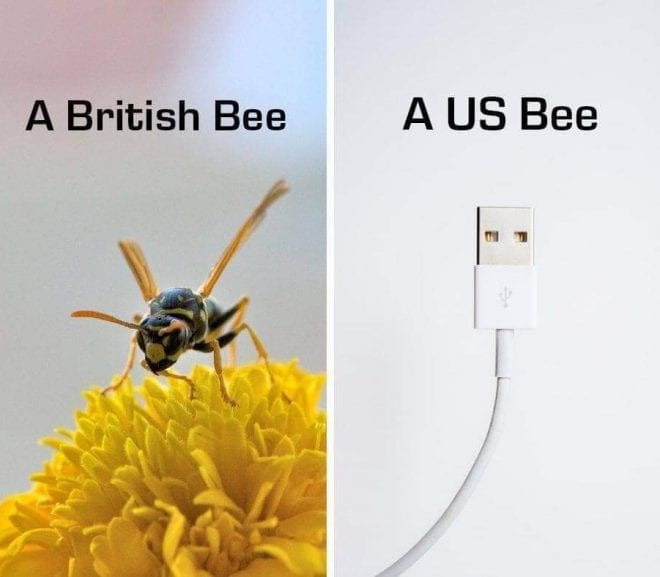 British Bee, US Bee